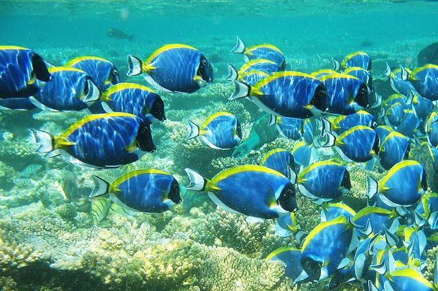 Pesce wikifur for Creare pesci