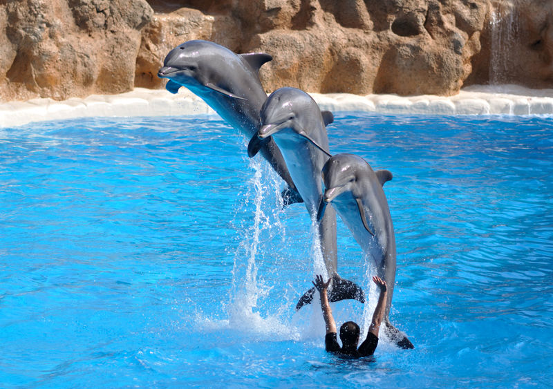 File:Dolphins jumping.jpg
